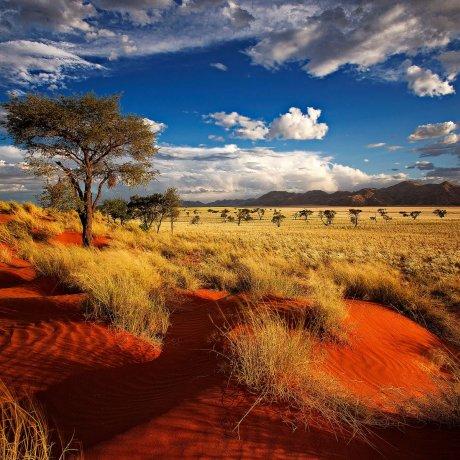 AUTENTICA NAMIBIA